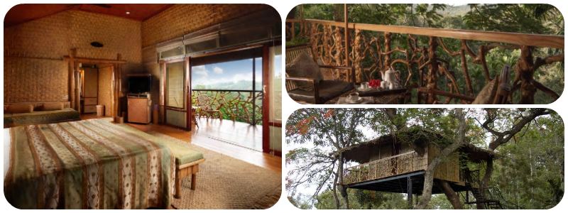 Best Treehouse hotel - Tranquil Resort