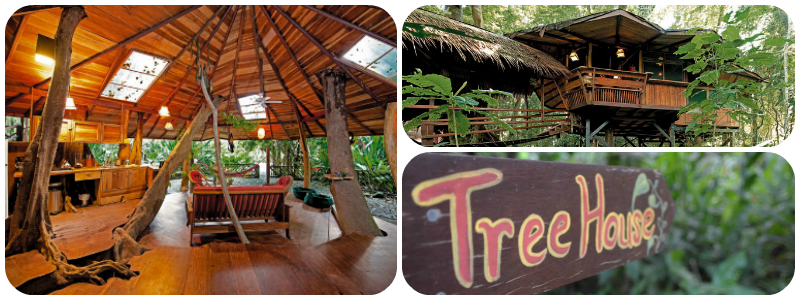 Tree House Lodge - Best TreeHouse Hotels in the world